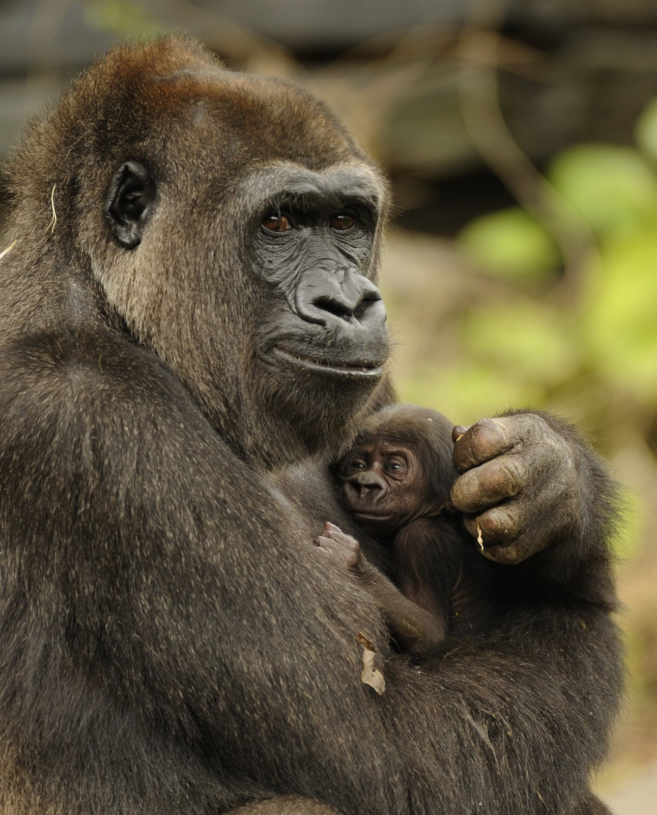 25 Momentos De Padres En El Reino Animal Fotos