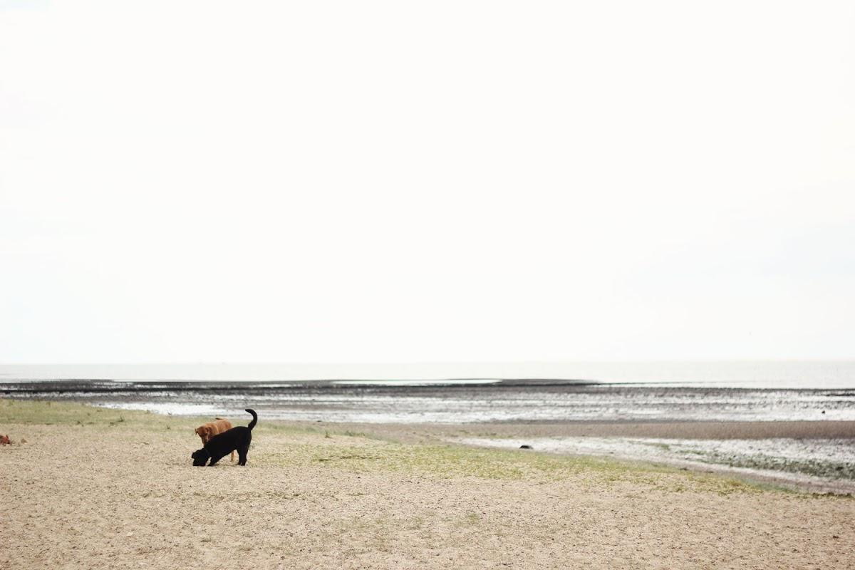 Mersea Island dog walking | www.itscohen.co.uk