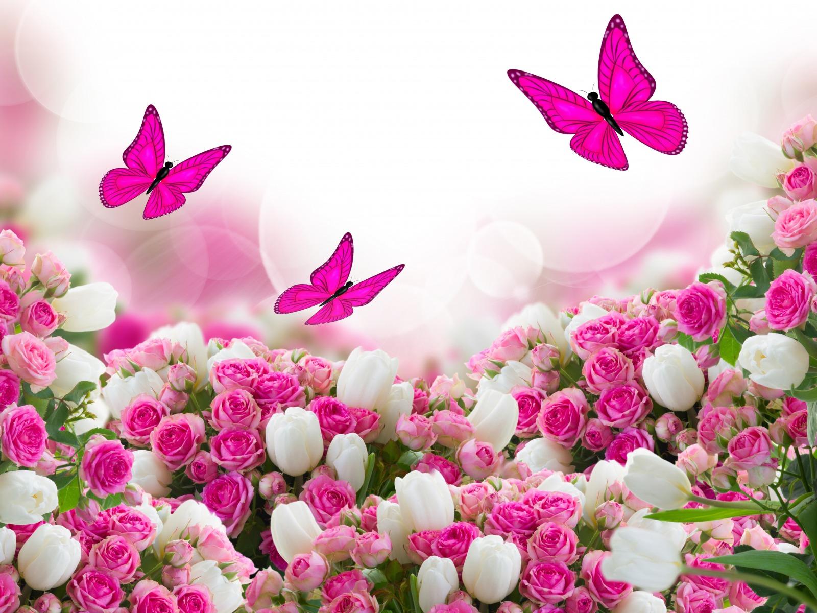 hình nền cánh bướm và những bông hoa