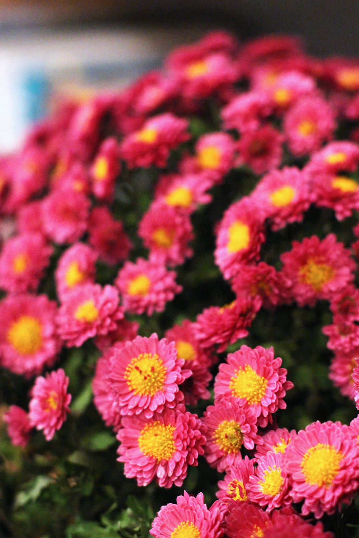 Flowers at Rozbrat 20 Restaurant, Warsaw - travel & lifestyle blog