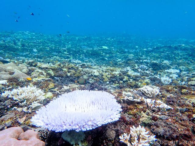 Fonds marins - Gili Meno - Lombok Bali