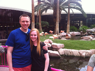 flamingo wildlife habitat at the flamingo hotel