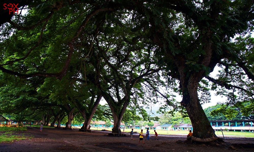 Centennial Trees in Glan