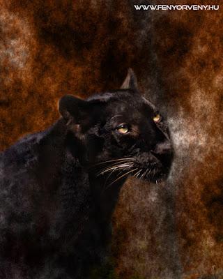 Szimbólumok/Állatszimbólumok: Párduc / Fekete párduc