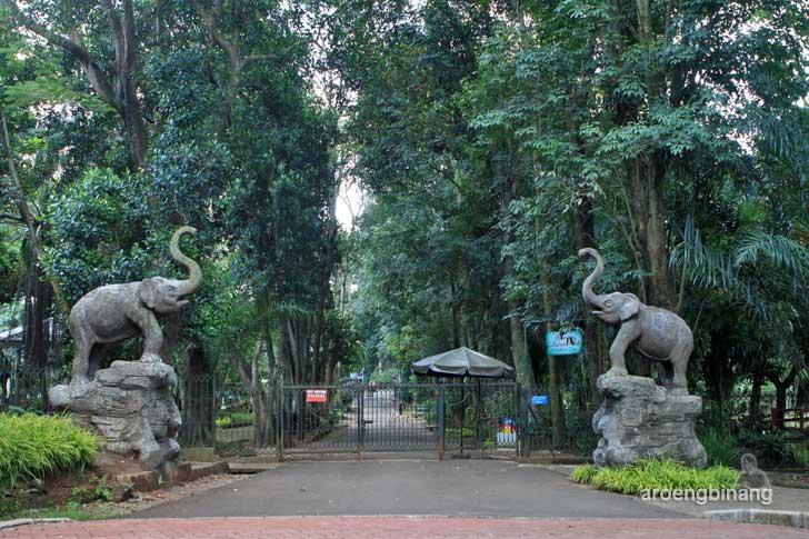 gajah tunggang kebun binatang ragunan jakarta