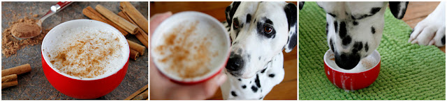 Dalmatian dog drinking a homemade puppuccino