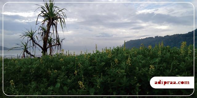 Panorama Pantai Teleng Ria | adipraa.com