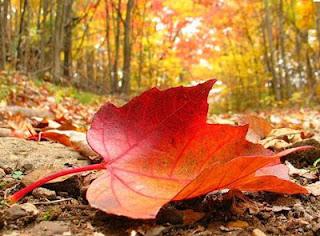 Imagen de una hoja seca por otoño
