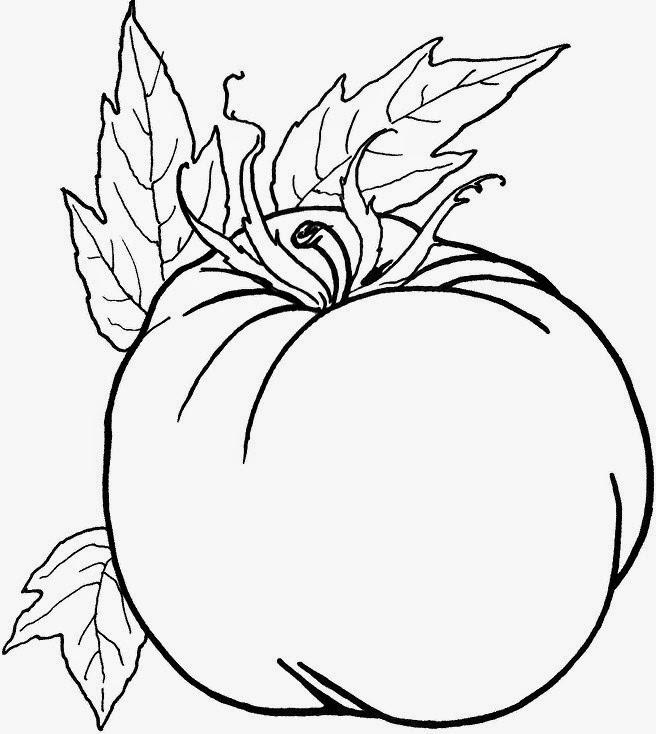 Gambar Kumpulan Gambar Tomat Mewarnai Tomato Sapawarga