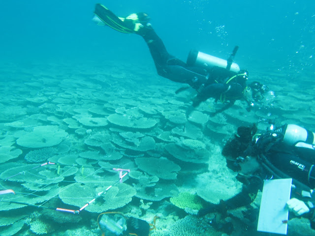 Great Barrier Reef almost drowned 125,000 years ago