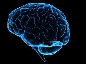 Neurociências explica!