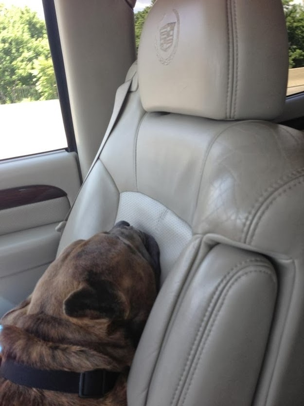 Shelter Dogs' Freedom Ride