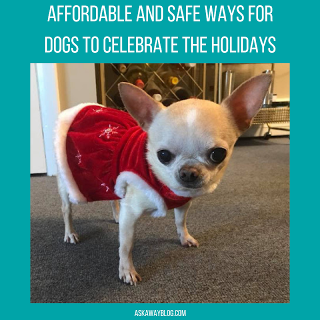 Affordable and Safe Ways for Dogs to Celebrate the Holidays