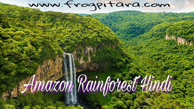 Interesting Amazon Rainforest Facts And Information Hindi