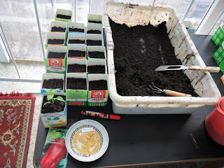 15 марта, посев перцев для открытого грунта