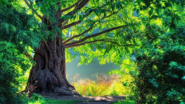 Full Hd 1080p Nature Wallpapers Download These Wallpaper