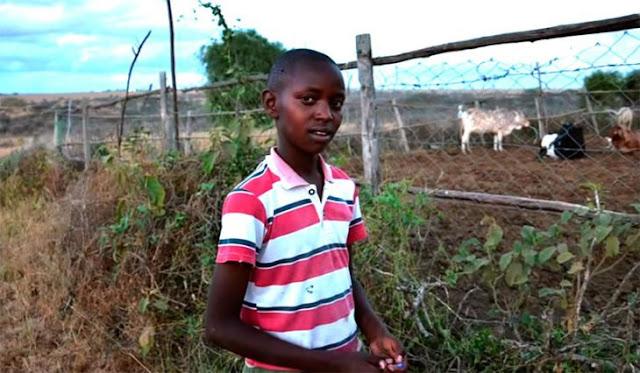 Este chico de 13 años venció a los leones y salvó a todo su ganado, ¡sólo con ingenio y creatividad!