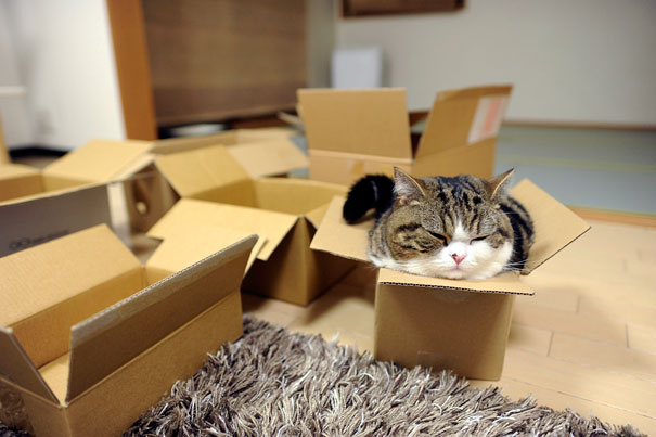 Maru, Master Of Boxes-2