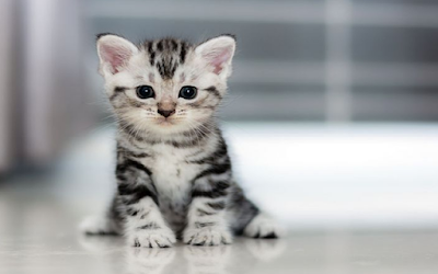 Download Bunyi Kucing Orisinil Mp3 (Lengkap, Dapat Untuk Apa