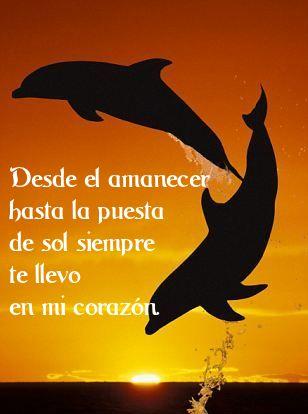 Frases Y Pensamientos Frases De Amor Con Imagenes De Delfines