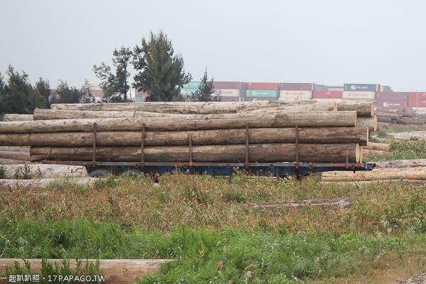 台中龍井|龍井原木場|順興木業儲木場|非洲花梨木|堆積成山的巨木|台中火力發電廠旁