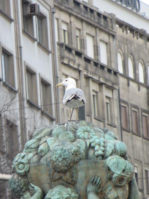 Porto Portugal gaivota