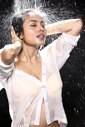 Bollywood, Tollywood, splendid, sexy, hot sexy actress sizzling, spicy, masala, curvy, pic collection, image gallery