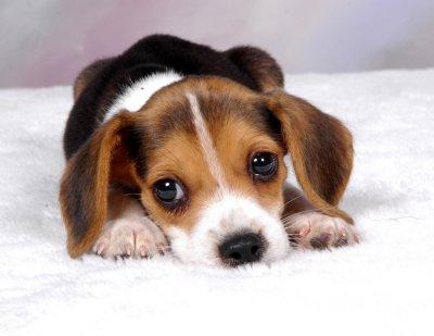 Immagini cani di piccola taglia da appartamento