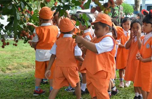CERIA : Beginilah suasana riuh dan keceriaan Anak-Anak TK Angkasa Yasarini Cabang Lanud Supadio Panen Rambutan.  Foto Siaran Pers Pangkalan TNI AU Supadio