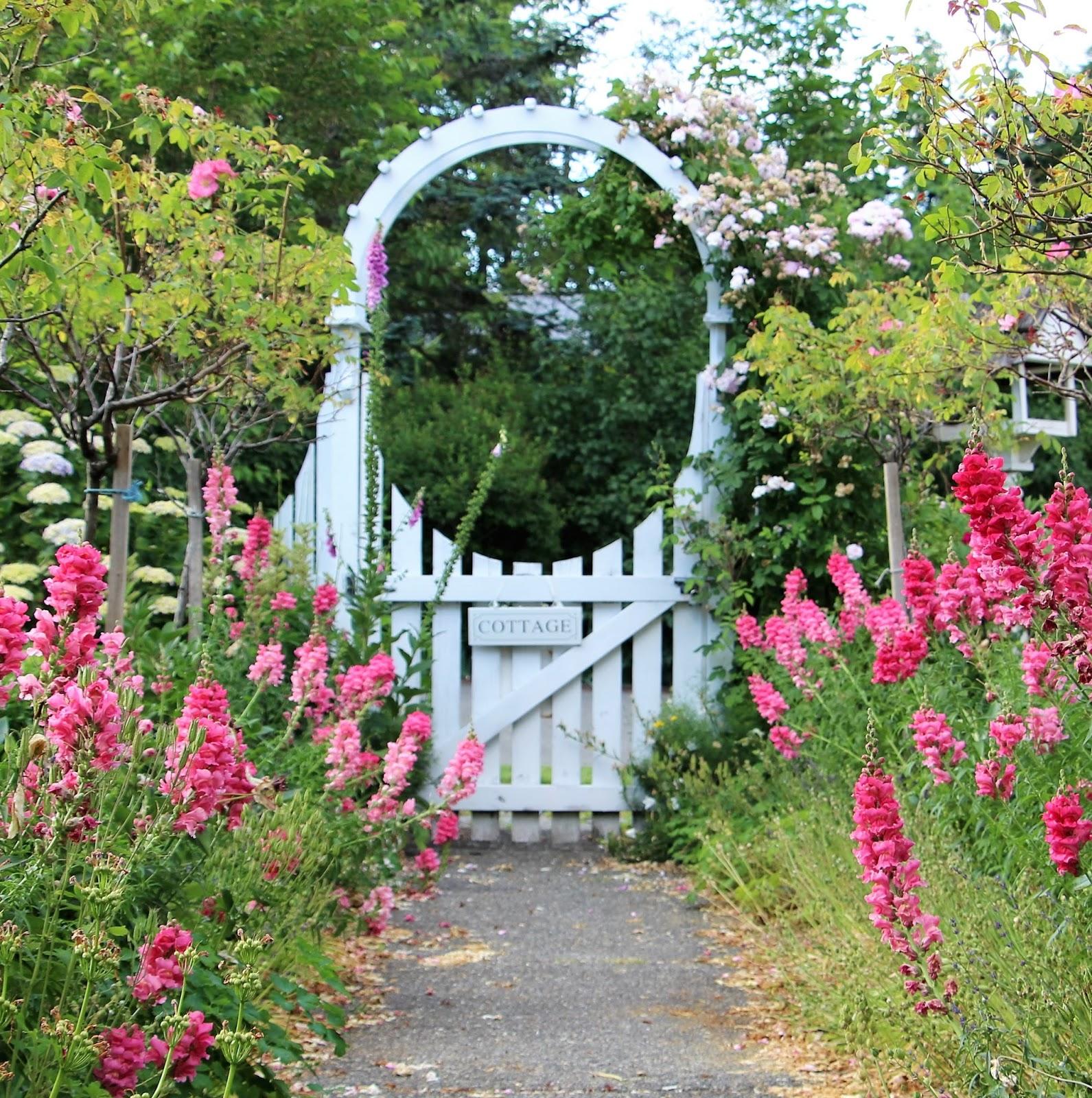 Garden Cottage: Fishtail Cottage: Cottage Garden 6/9/16