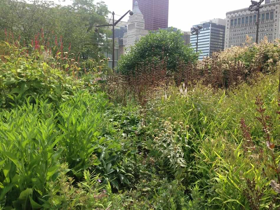 Piet Oudolf's planting at Lurie Garden in Millenium, full of different perennial plants