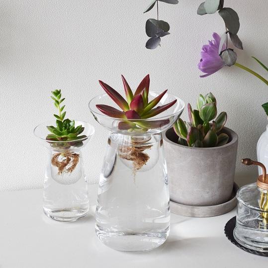 L 39 aqua culture ou l 39 art de faire pousser des plantes sans terre - Plante vivant sans terre ...