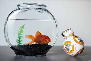 The BB-8 Droid makes a really great gift idea for any Star Wars fan, look how it's interacting with the fish in the fish bowl - so cute!