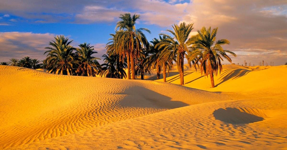Desert Biome - Mrs. B