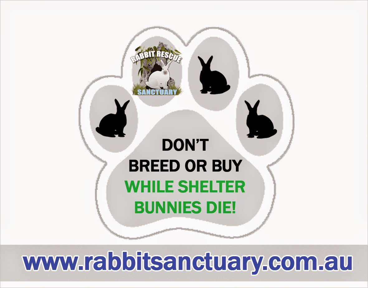 Adopt a Rabbit in Newcastle