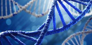 Apa Yang Dimaksud Dengan DNA