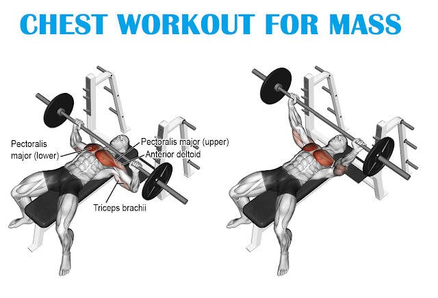 Best Chest Workout for Mass