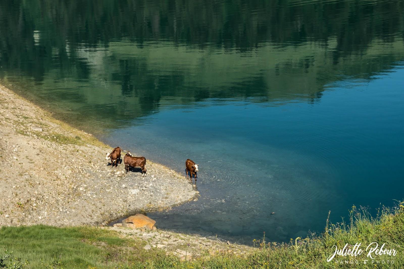 Alpage au lac de Roselend