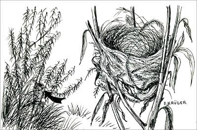 Monterita cabeza negra Poospiza melanoleuca