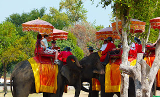 Ayutthaya day tour and elephants