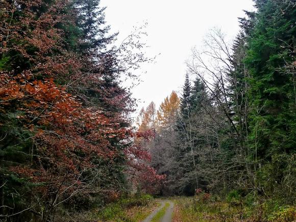 Моршин. Ліс