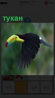 Изображение птицы тукан в полете с большими черными крыльями и желтый клюв