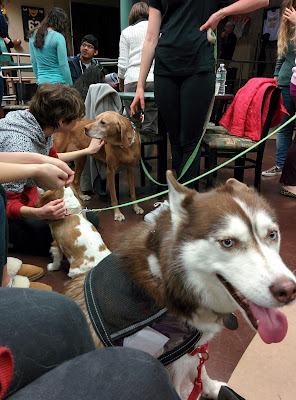 Dogs trained to be Therapy Dogs at a college Stress Buster event.