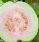 Guava fruit - Treatment Of Skin Problems
