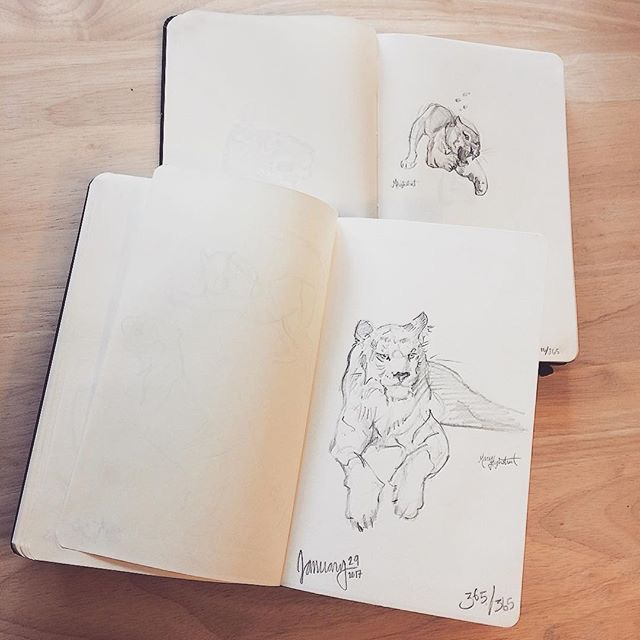 365 Days of Sketching Challenge by Mary Highstreet, Comparing Tigers on Day 10 with Day 365