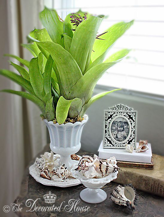 The Decorated House ~ Decorating for Summer with Shells - Milk Glass - Bromeliads