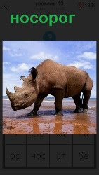 идет носорог по воде 460 слов 4 уровень 13