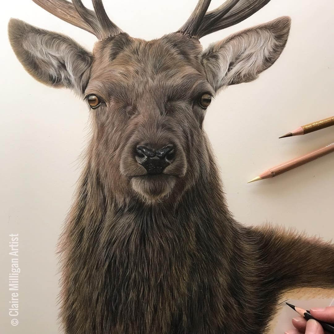 07-Red-Deer-Claire-Milligan-Realistic-Color-Pencil-Animal-Portraits-www-designstack-co