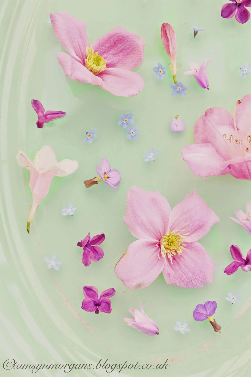 Vintage Plate and Flowers
