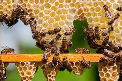 Τα μυστικά των μελισσών, εσύ το ήξερες αυτό;